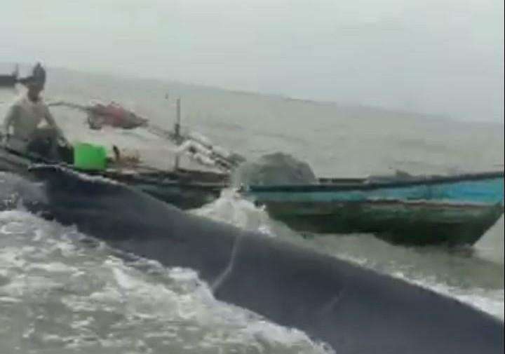 Ket Foto : Nelayan Desa Silo Baru Selamatkan Ikan Paus yang Terdampar. (MU/Azhari)
